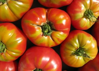 New process makes electricity from tomato waste