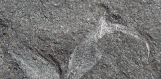 Researchers discover oldest fossil of a terrestrial organism