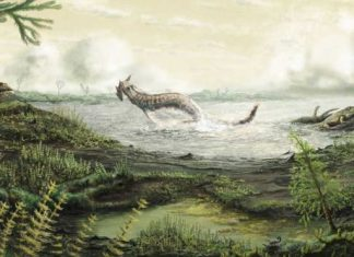 Fossils tell story of first life on land, finds new research