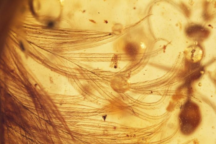 Researchers Find First Feathered Dinosaur Tail Preserved in Amber