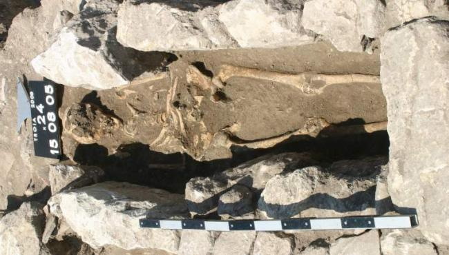 Fossilized bones reveal 800-year-old infection, says new research
