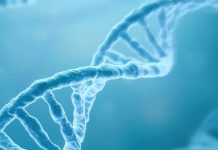Autism linked to cognitive genes, Researchers Say