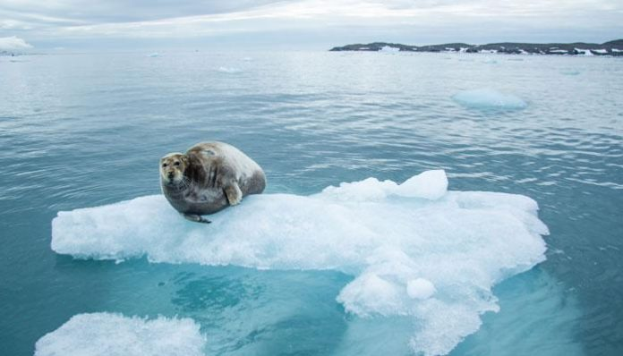 Global warning: Arctic Sea Ice May Disappear