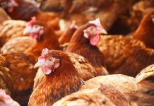 H7N9 Bird Flu Cases On The Rise In China, Reports