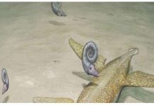 Benjamin Kear: Scientist identify a 190-million-year-old sea monster