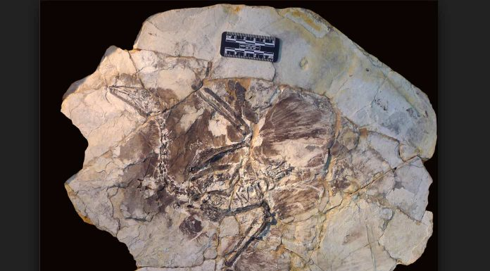 New research: Fossilised hair five times rarer than feathers