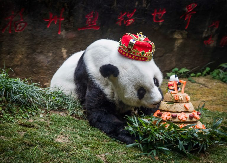 World's oldest captive giant panda dies aged 37 in China