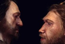 Neanderthal DNA in humans may influence mood, sleep patterns: Researchers Say
