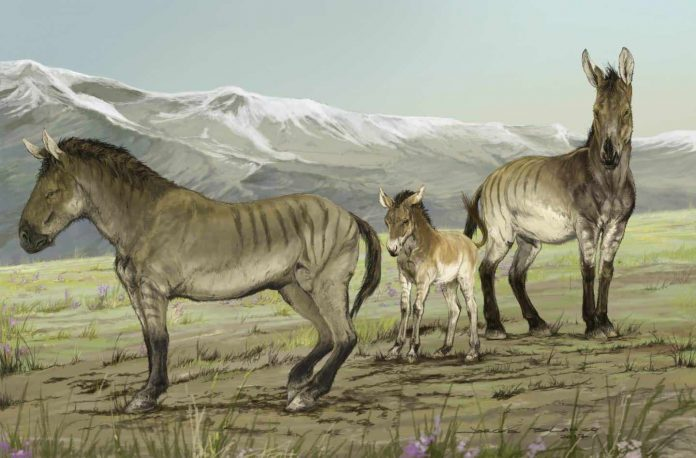 Researchers discover previously unrecognized genus of extinct horses