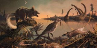 Scientists Find Fossils Of 'Man's Earliest Ancestors' In England