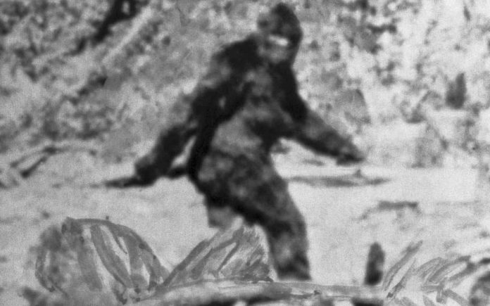 DNA tests reveal the Yeti's not-so-abominable identity (research)