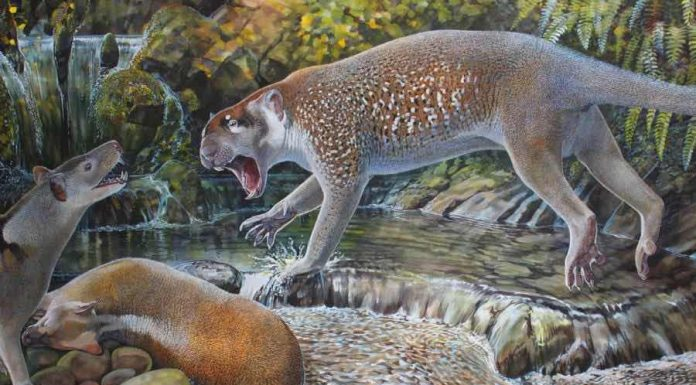 New species of extinct lion discovered in Australia, finds research