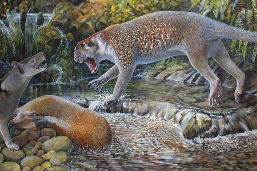 Australia: Scientists discover remains of ancient extinct lion species