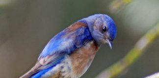 Noise pollution causes chronic stress in birds, finds new research