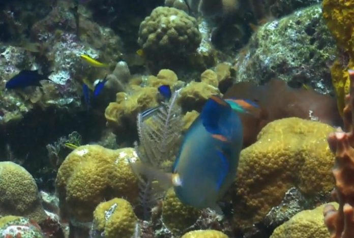 Oceans losing oxygen, can damage marine life, says new research