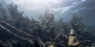 Study: Coral Reefs Are Bleaching Too Frequently to Recover
