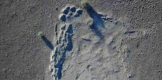 Research: Mammoth prints found by UO group suggest a family trek