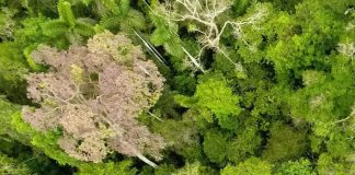 Research: The Amazon Might Be Past the Point of Saving