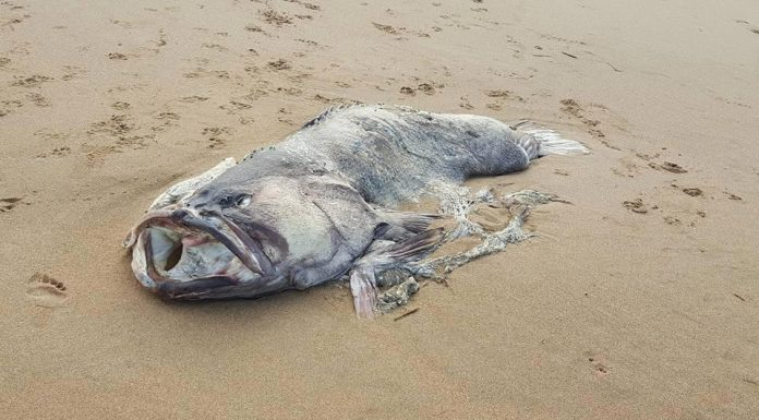 Massive mystery sea creature washes up on shore (Picture)