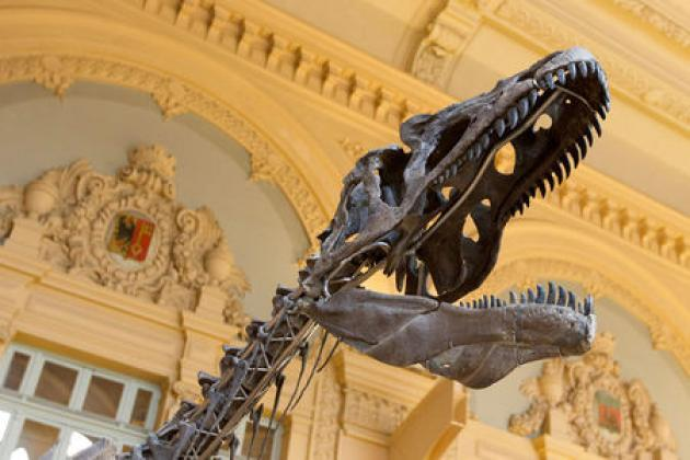 Nine-meters long fossilized Dinosaur to be auctioned in Paris