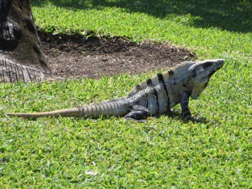 Research: Ancient Reptile Could Detach Tail To Escape Predators