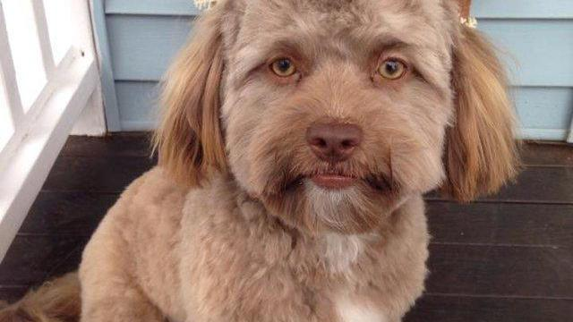 This Dog Has A Human Face And It's Freaking People Out (Photo)