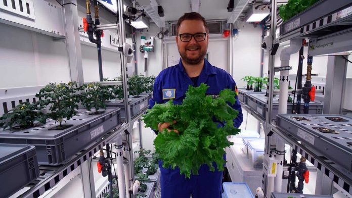 Researchers harvest Antarctic greenhouse vegetables