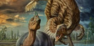 3,000 Pound Dinosaurs May Have Incubated Eggs Like Modern Birds, says new research