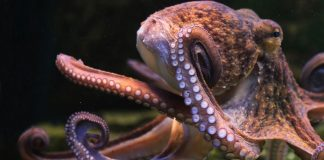 Researchers Publish Paper Suggesting Octopuses Are Aliens