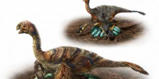Study: How huge dinosaurs nested without crushing their eggs