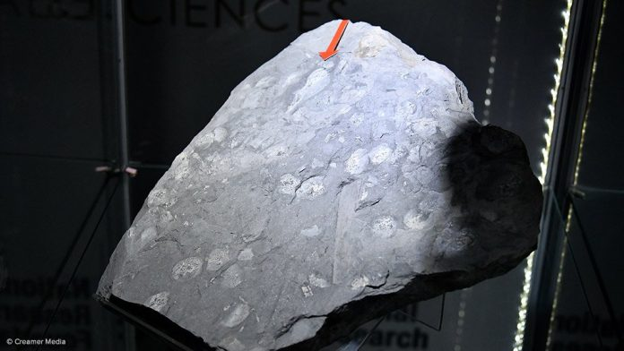 Researcher unveils ground-breaking fossil discovery