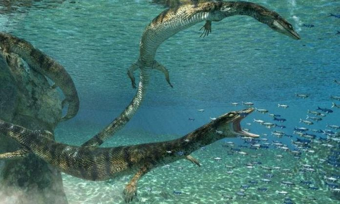 Researchers discover new species of ancient marine lizard