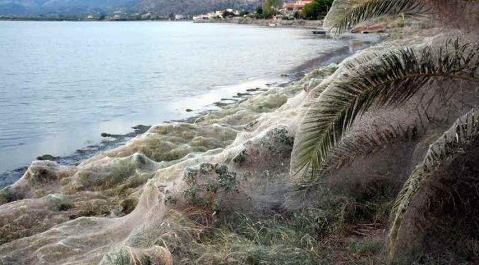 Spider web in Greece: 1000-Foot-Long Spider Web Is Just a Summer Orgy