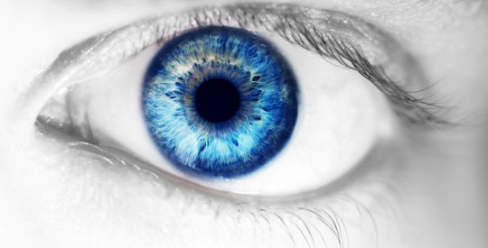 Human retinas grown in a dish explain how color vision develops