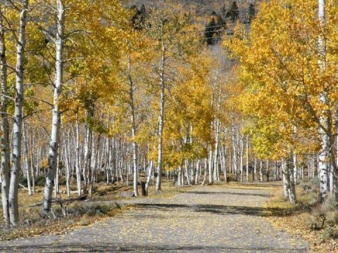 One of the World's Largest Organisms Is Slowly Dying Due to Humans