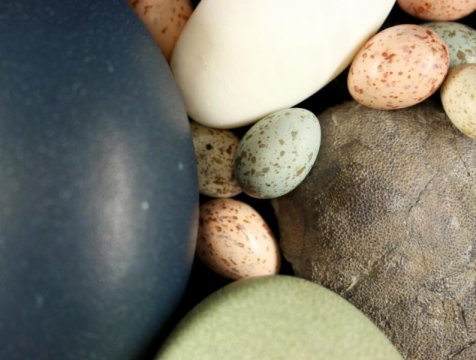 Some dinosaurs had exquisite eggs with colors, spots, speckles