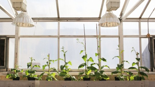 Genetically modified 'shortcut' boosts plant growth by 40pc