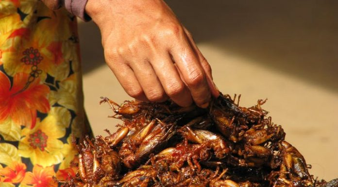 Researchers Claim People Have To Start Eating Bugs To Survive