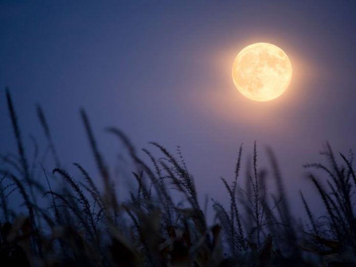 Very rare Harvest 'Micromoon' rises on Friday the 13th