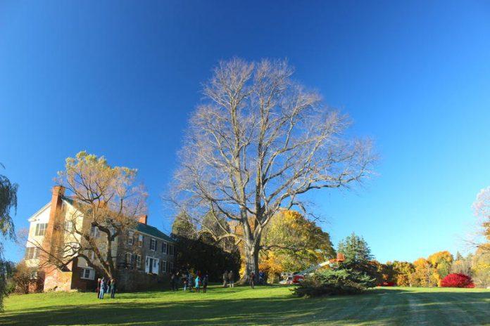 Largest Vermont Elm Tree Succumbs To Dutch Elm Disease