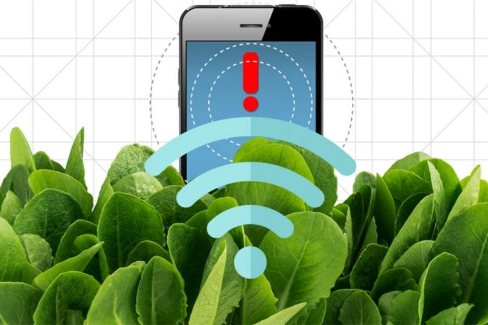 Spinach doped with carbon nanotubes turns into bomb detector