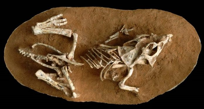 Dinosaur eggs took a surprisingly long time to hatch, Study