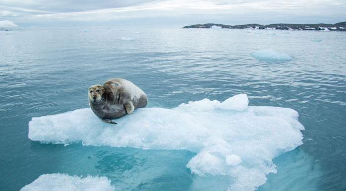 Global warning: Arctic Sea Ice May Disappear