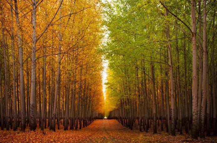 New Study Reveals Upland Forest Trees Emit Methane