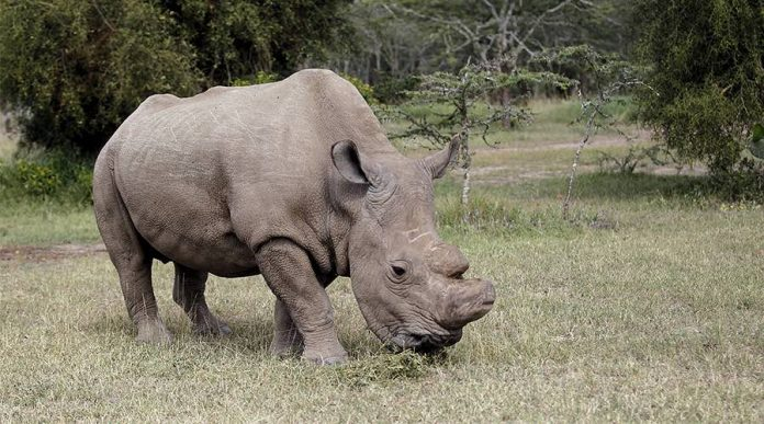 Rhino joins Tinder to find mate (Picture)