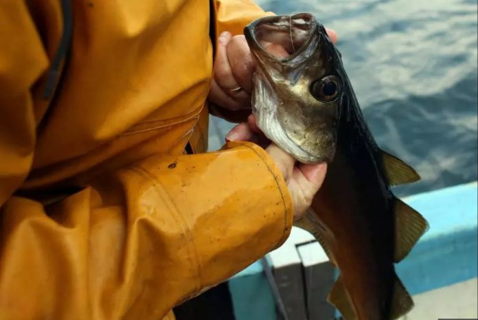 Great Lakes Fish Found to Have Antidepressants in Brains, Study