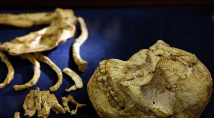 'Little Foot' skeleton goes on display in South Africa