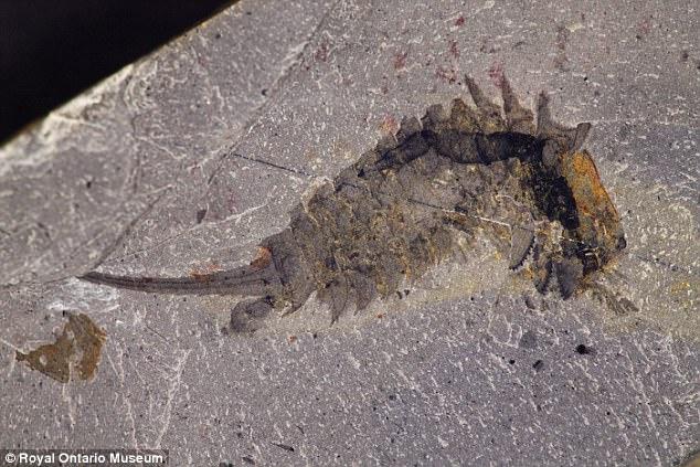 Researchers Describe 500-Million-Year Old Sea Predator