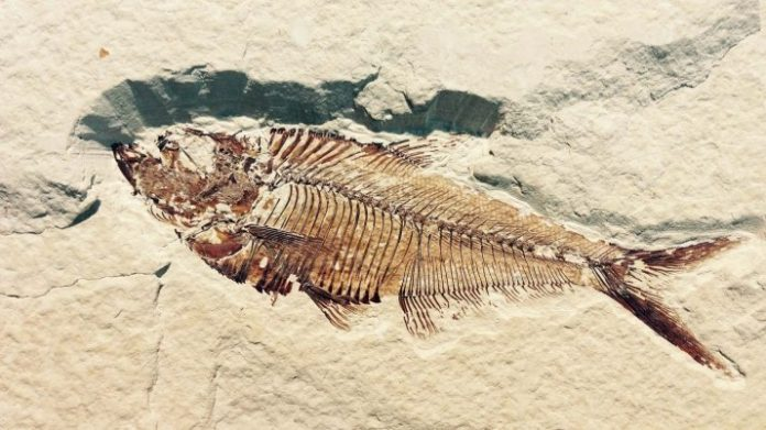 10-Year Old Boy Discovers Ancient Fish Fossil, Report