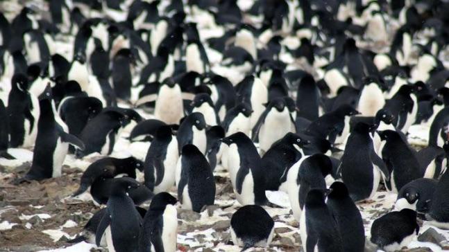 Video: Secret 'city of penguins' hidden in the Danger Islands of Antarctica